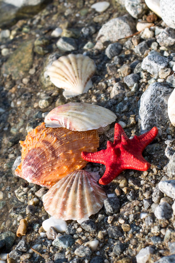 Étoile de la Mer Rouge, coquilles de mer, plage en pierre, fond d'eau propre images libres de droits