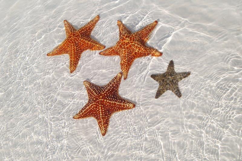 Étoile de mer à la mer fine image libre de droits