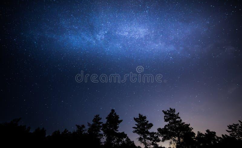Étoile de mer de Kiyv images stock