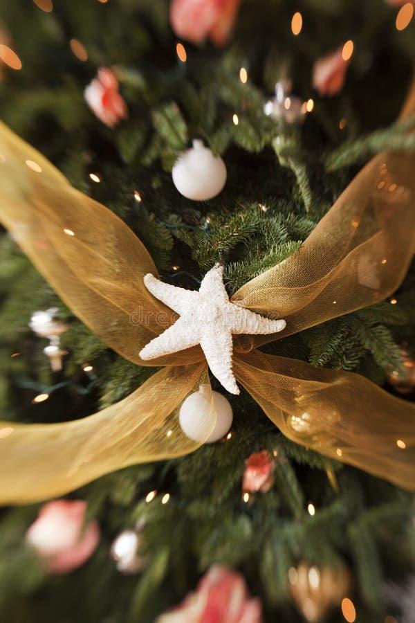 Étoile de mer sur l'arbre de Noël images libres de droits