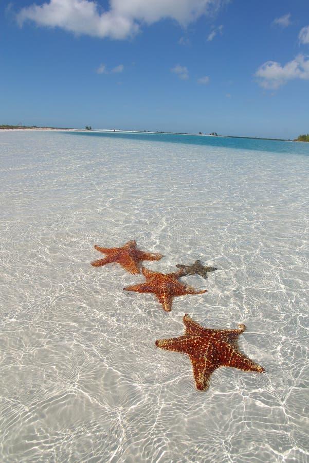 Étoile de mer sur la plage de paradis photos libres de droits