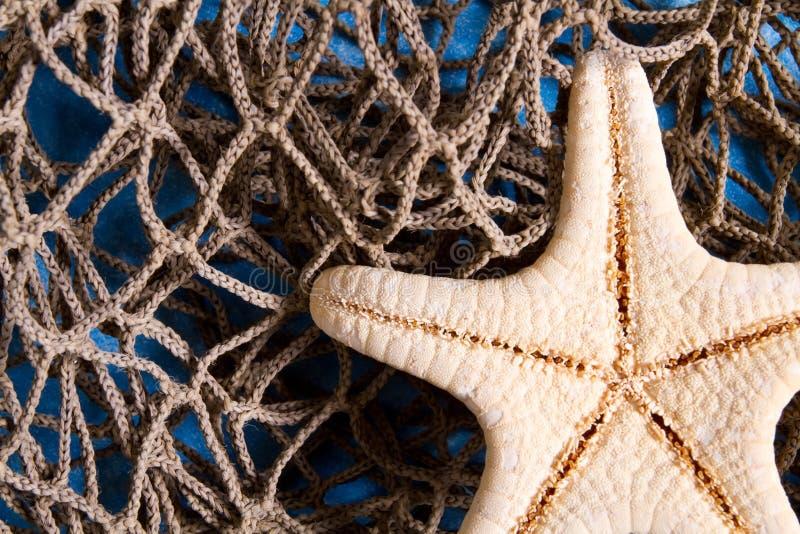 Étoile de mer sur le filet de pêche image stock