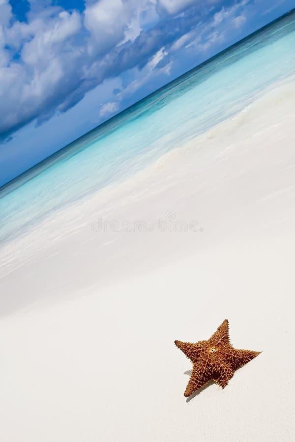 étoile de plage photos stock