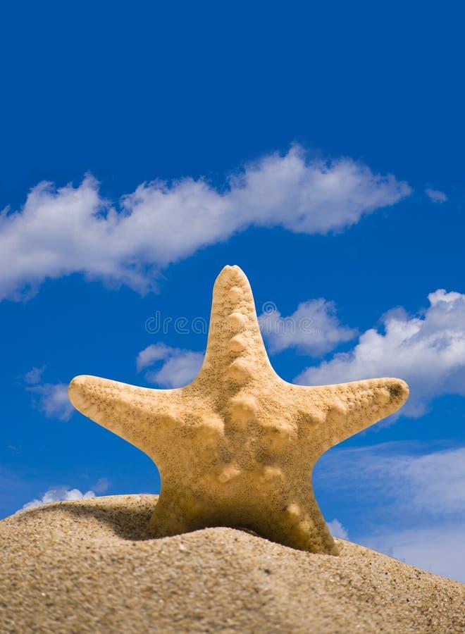 étoile de poissons images stock