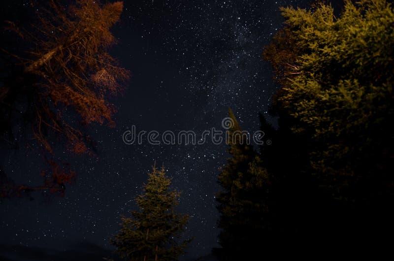 Étoiles dans la forêt photo libre de droits