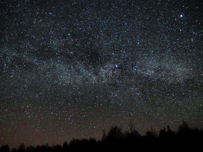 Étoiles de ciel nocturne et de manière laiteuse, constellation de Cygnus et de Lyra au-dessus de forêt images stock