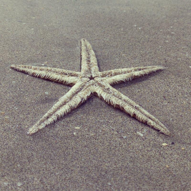 Étoiles de mer photos libres de droits