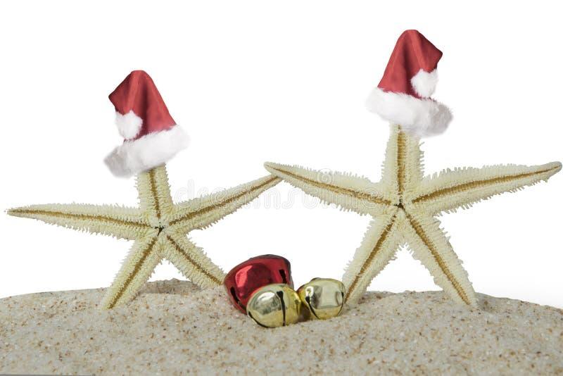 Étoiles de mer avec le chapeau de Noël photos libres de droits