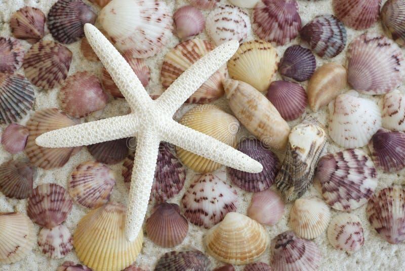 Étoiles de mer avec le fond coloré de Seashell images stock