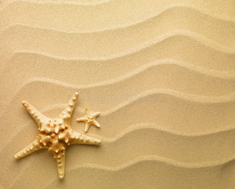 Étoiles de mer avec le sable images libres de droits