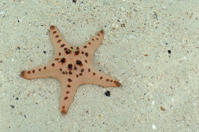 Étoiles de mer/Bintang Laut images stock