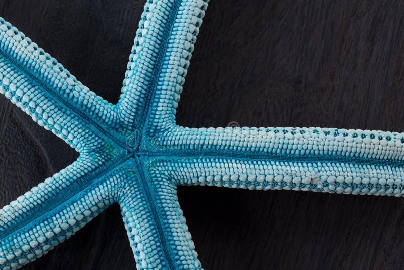 Étoiles de mer bleues image libre de droits