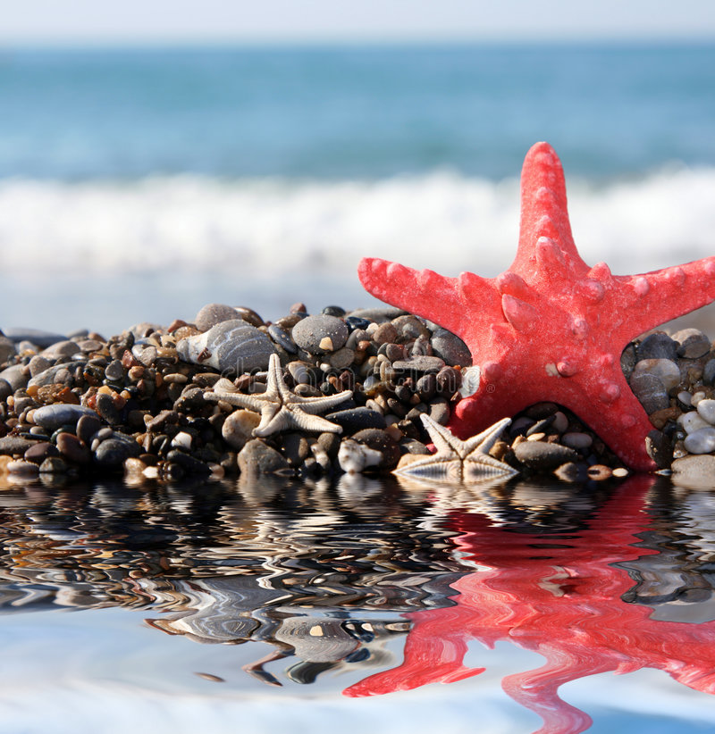 étoiles de mer bleues de mer de fond image libre de droits