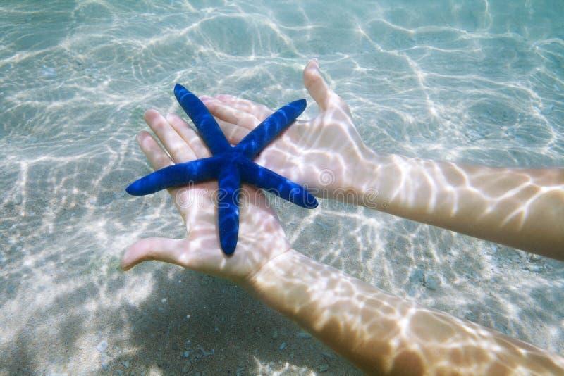 Étoiles de mer bleues sur des paumes photo stock