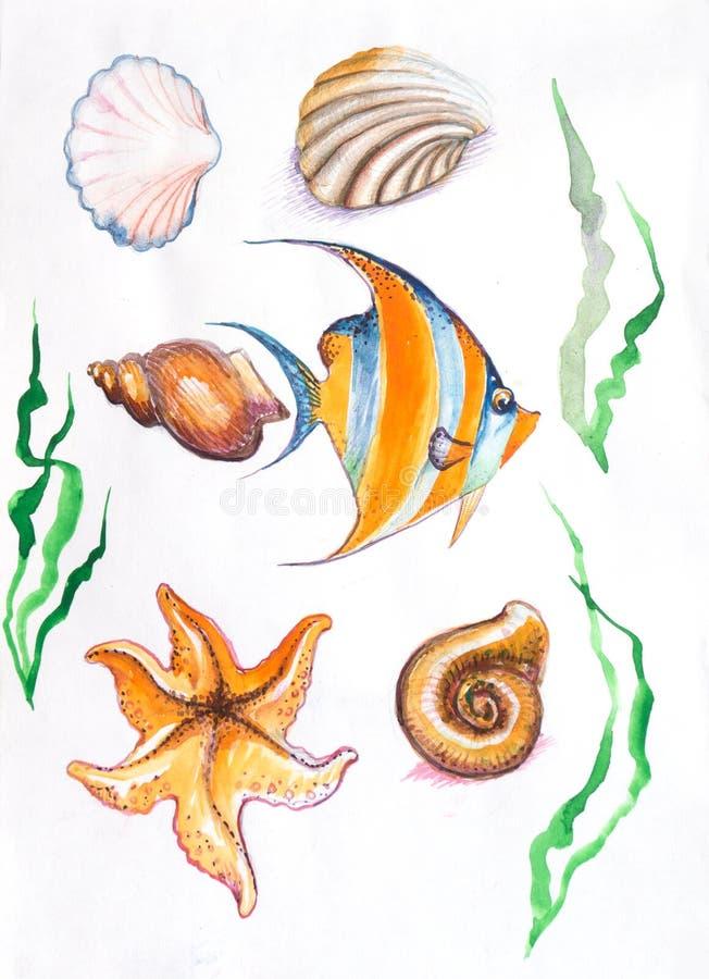 Étoiles de mer d'algue, aquarelle de poissons de coquilles illustration libre de droits