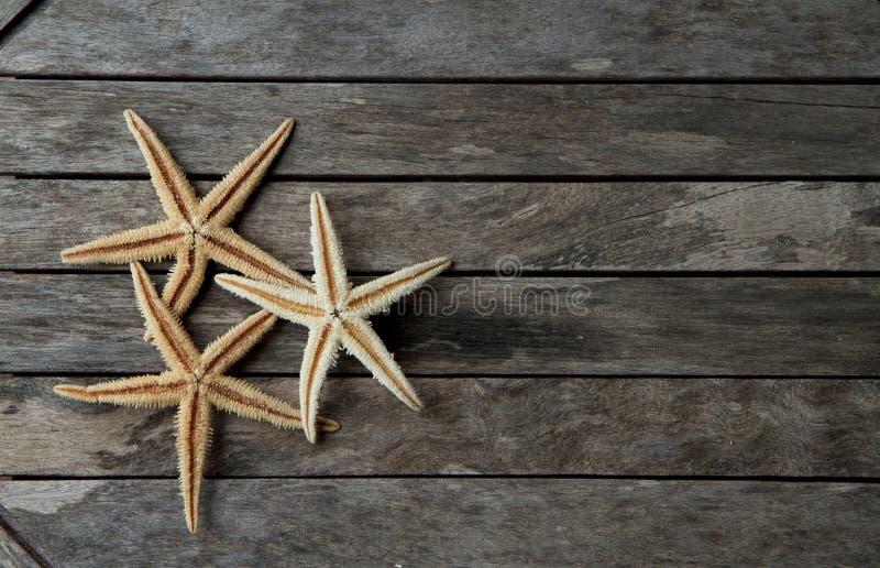 Étoiles de mer dans en bois image stock