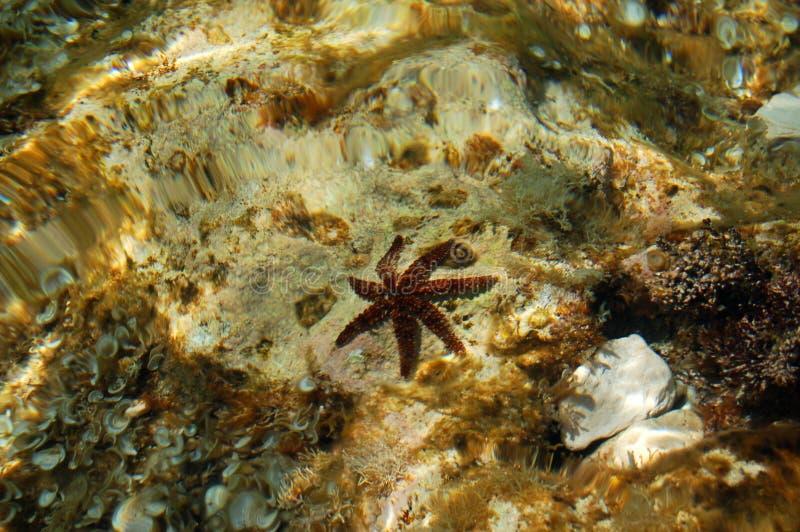 Étoiles de mer dans l'eau images libres de droits