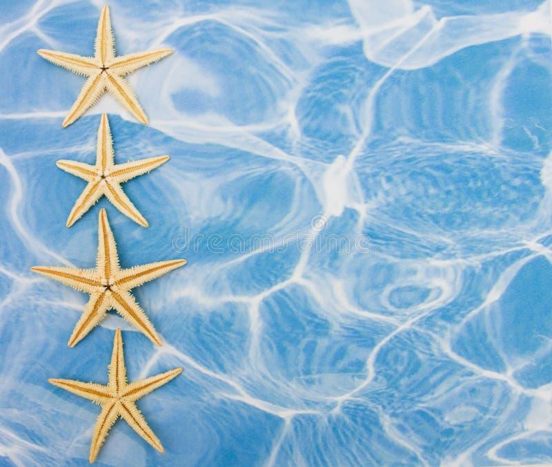 étoiles de mer de cadre photo stock