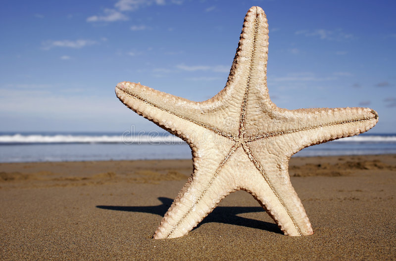 Étoiles de mer de plage photos libres de droits