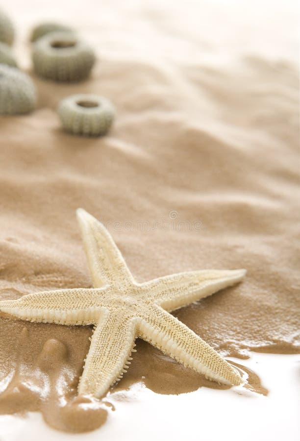 étoiles de mer de plage photographie stock libre de droits