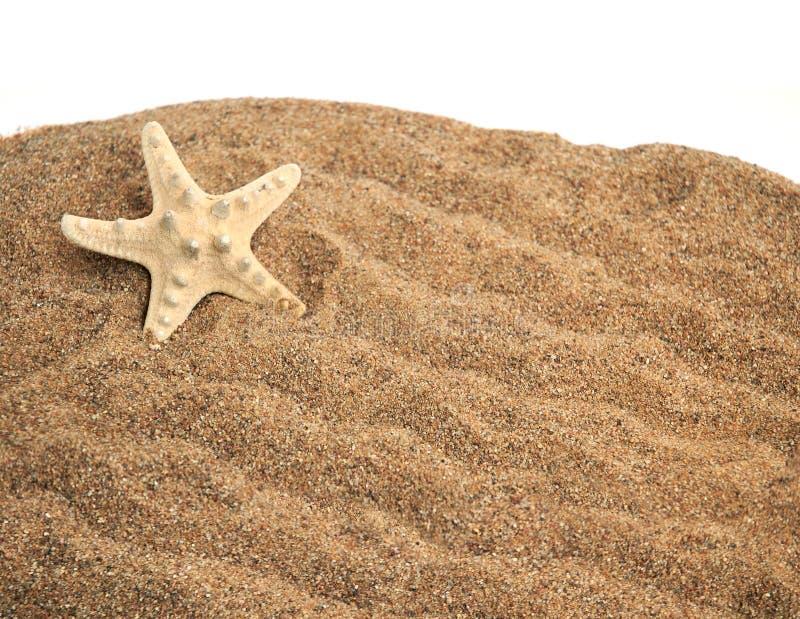 étoiles de mer de sable image stock