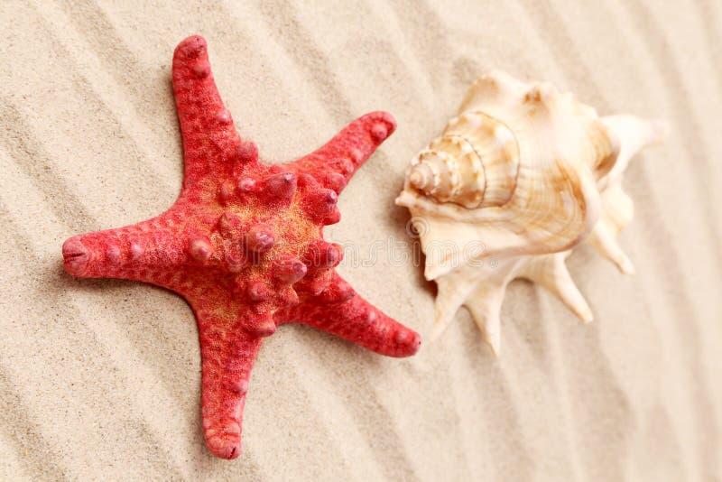 Étoiles de mer et coquillage sur le sable. image libre de droits
