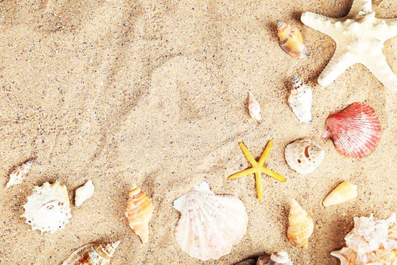 Étoiles de mer et coquilles sur la plage de sable image stock