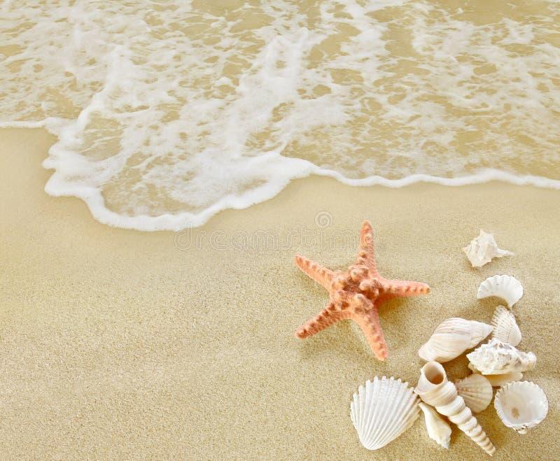 Étoiles de mer et coquilles sur la plage sablonneuse photographie stock libre de droits