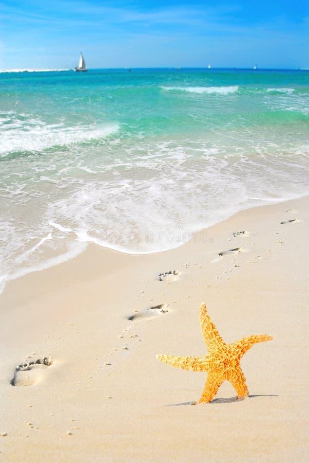 Étoiles de mer et empreintes de pas sur la plage image stock