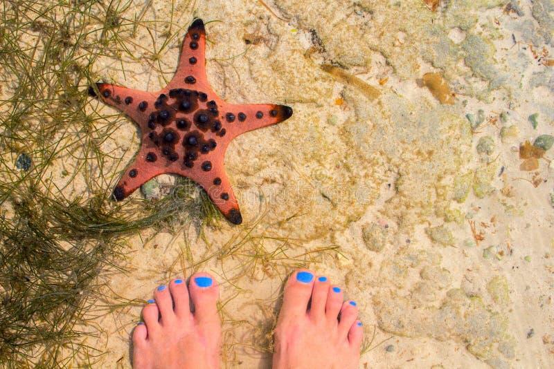 Étoiles de mer et femme rouges en eau de mer Bord de la mer avec le sable blanc Vue supérieure de sable de mer avec les pieds fem photo stock