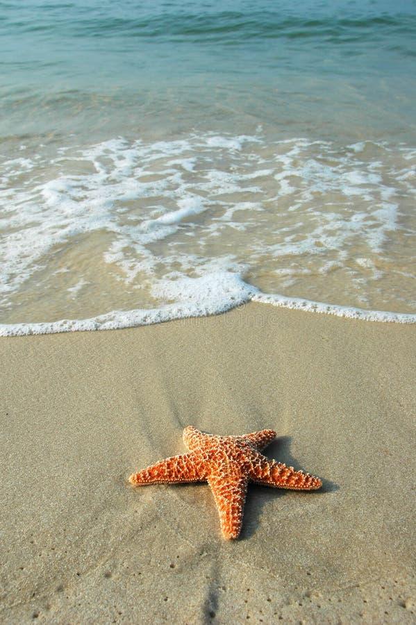Étoiles de mer et l'océan