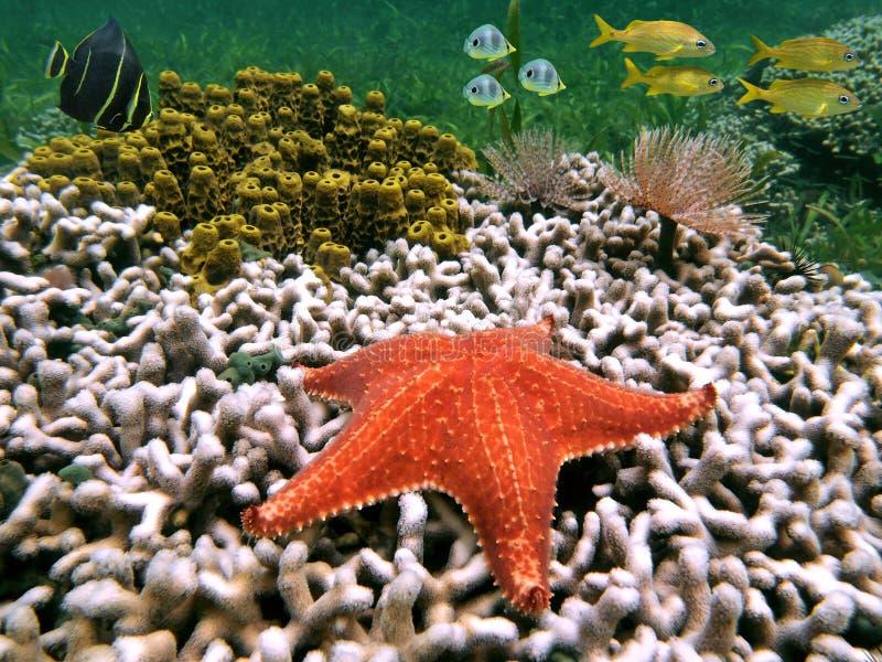 Étoiles de mer et poissons images stock