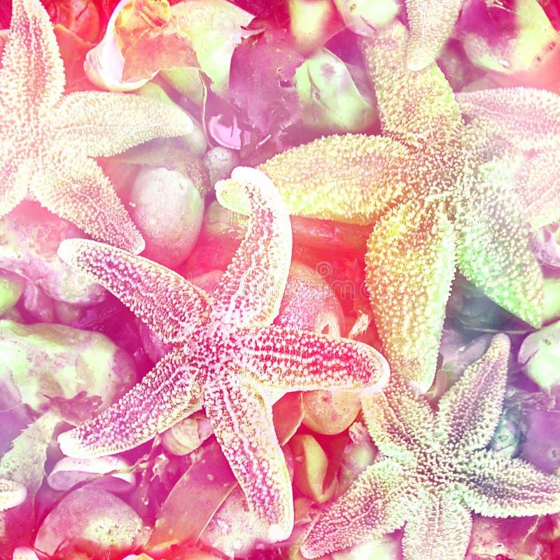 Étoiles de mer et Shell Print de plage illustration stock