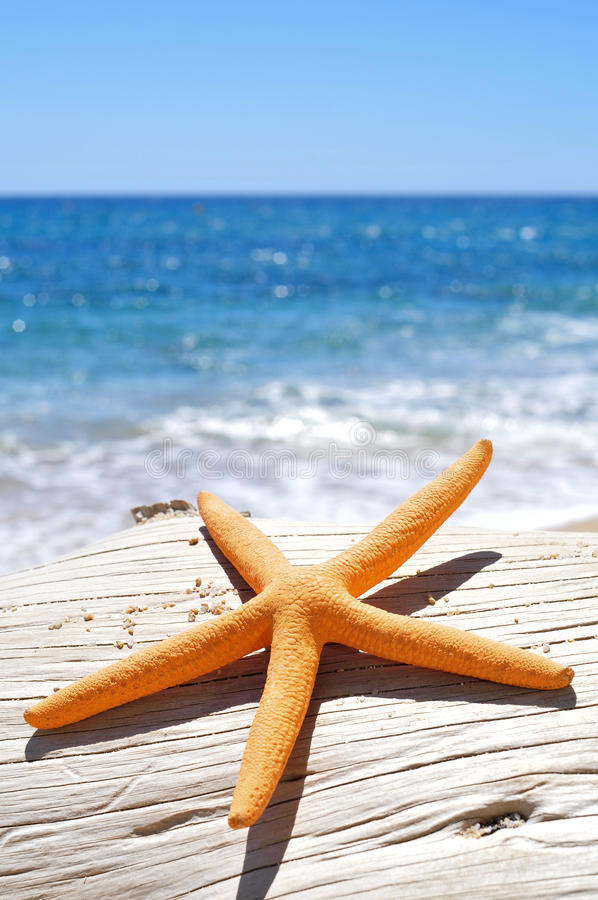 Étoiles de mer oranges sur un vieux tronc d'arbre délavé sur la plage photo stock
