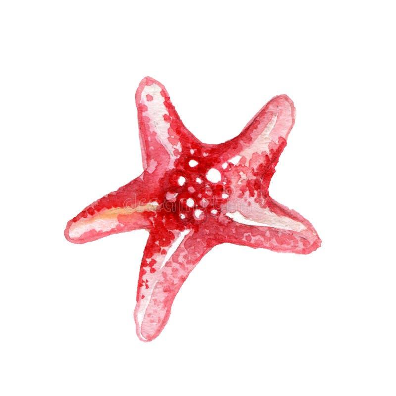 Étoiles de mer rouges illustration libre de droits
