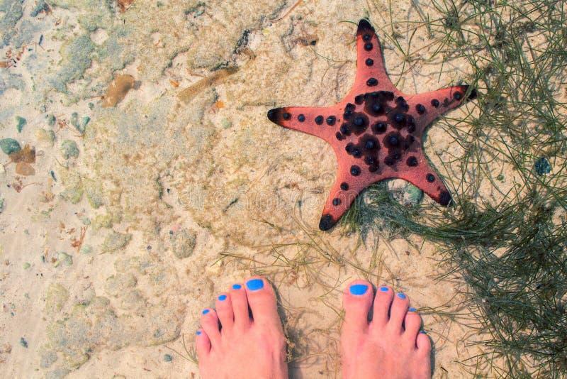 Étoiles de mer rouges et pieds femelles en mer Bord de la mer avec le sable blanc Vue supérieure de sable de mer avec les pieds f photos stock