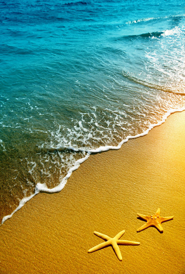 Étoiles de mer, sable et onde photos stock