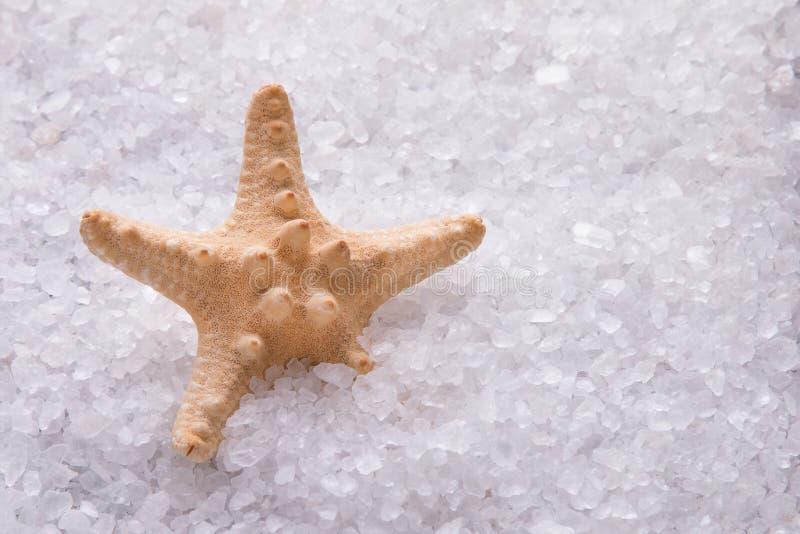 Étoiles de mer se situant dans les cristaux du sel de mer blanche images stock