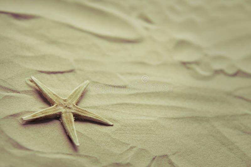 Étoiles de mer seules sur un sable de plage images libres de droits