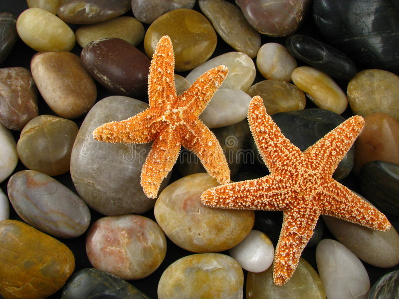 Étoiles de mer sur des roches image stock