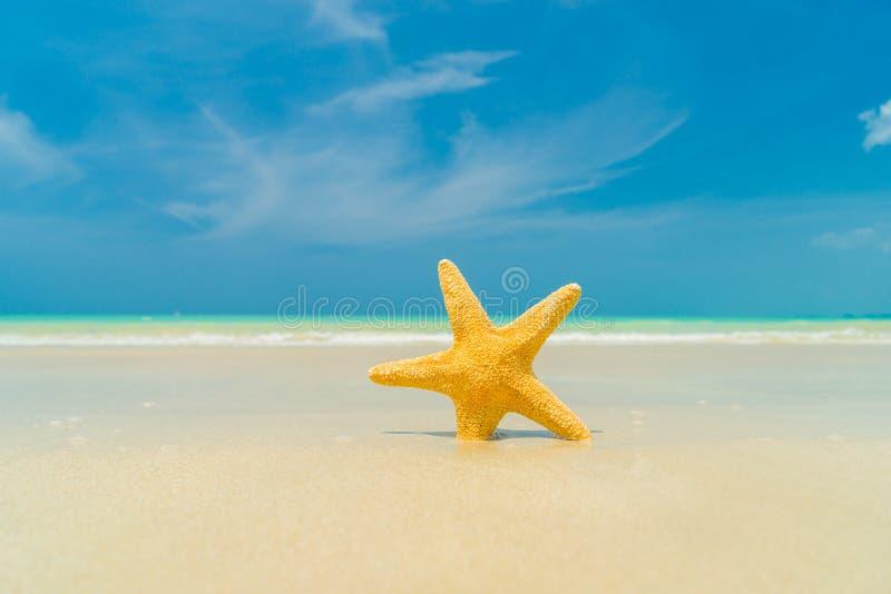 Étoiles de mer sur la plage photographie stock libre de droits