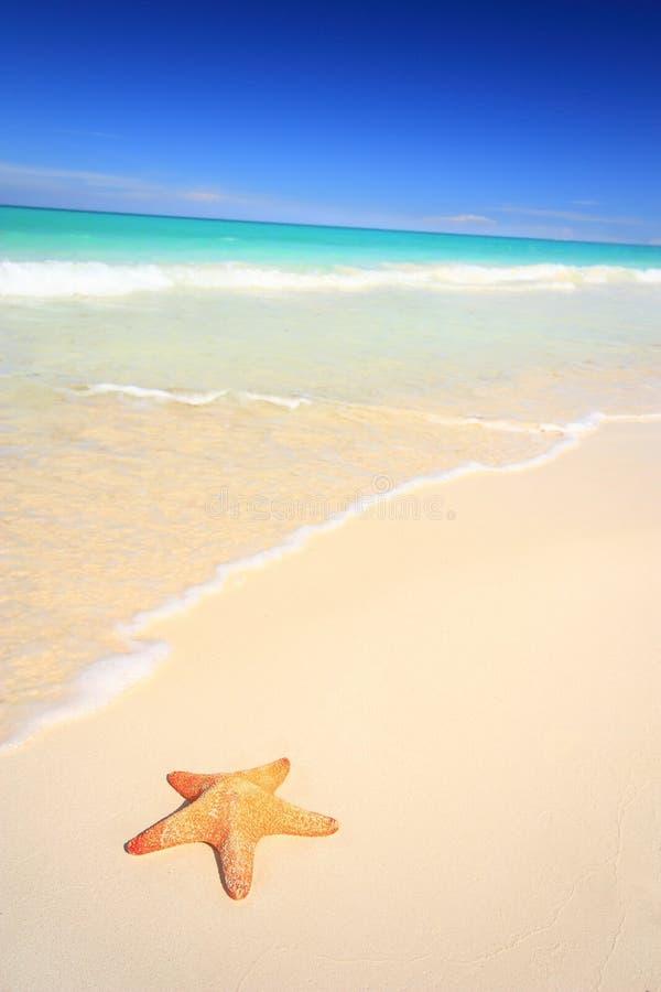 Étoiles de mer sur la plage image libre de droits