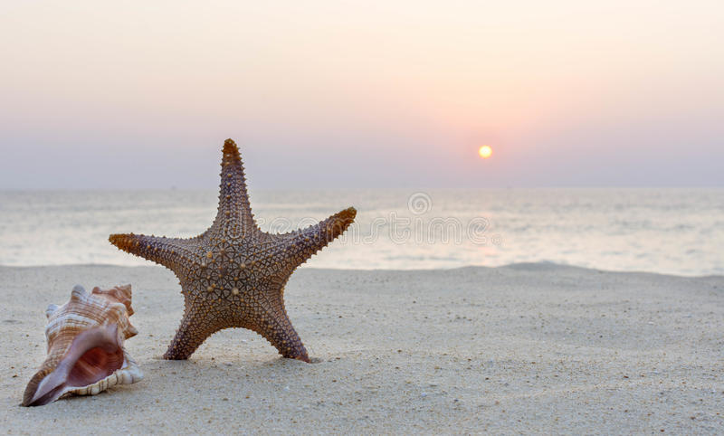Étoiles de mer sur la plage au crépuscule photos libres de droits