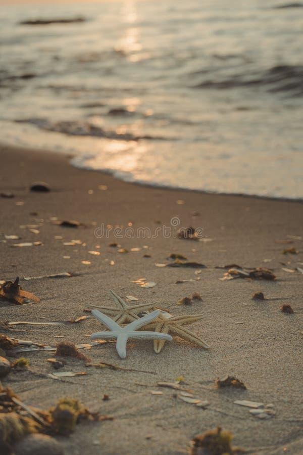 Étoiles de mer sur le rivage de la plage images libres de droits