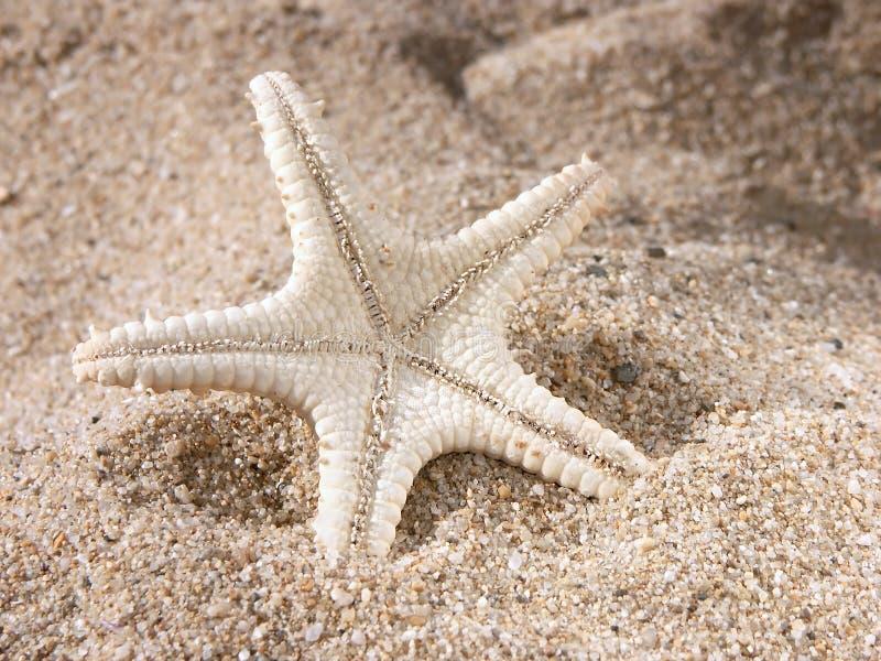 Étoiles de mer sur le sable images libres de droits