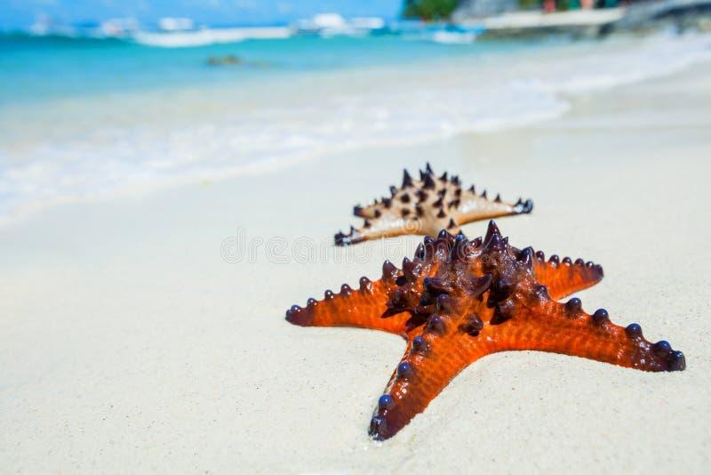 Étoiles de mer sur le sable tropical photos libres de droits