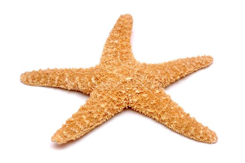 Étoiles de mer sur un fond blanc photo libre de droits