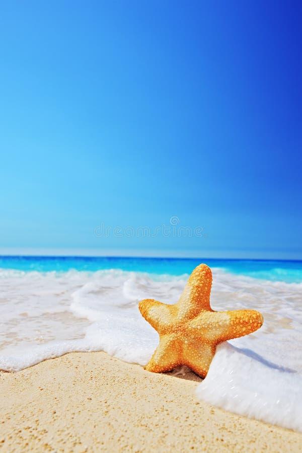Étoiles de mer sur une plage avec le ciel et l'onde clairs photo libre de droits