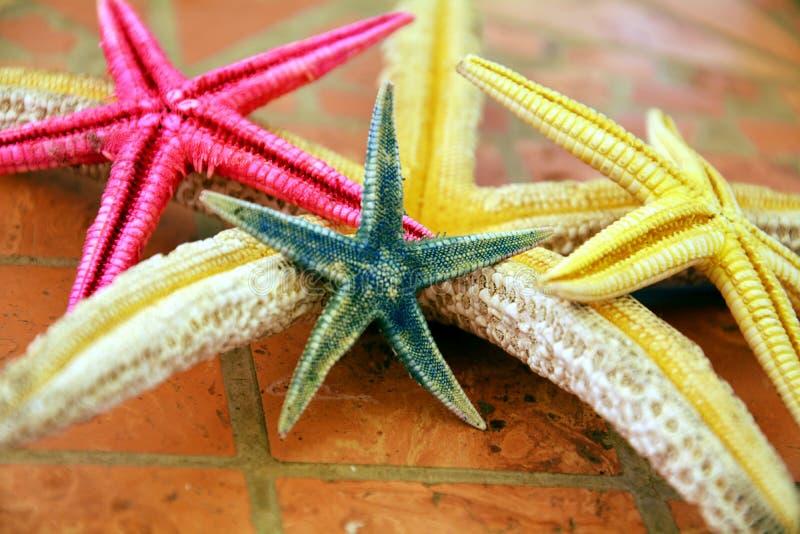 Étoiles vertes roses de Yellow Sea dans des tonalités grises Fin vers le haut photo libre de droits