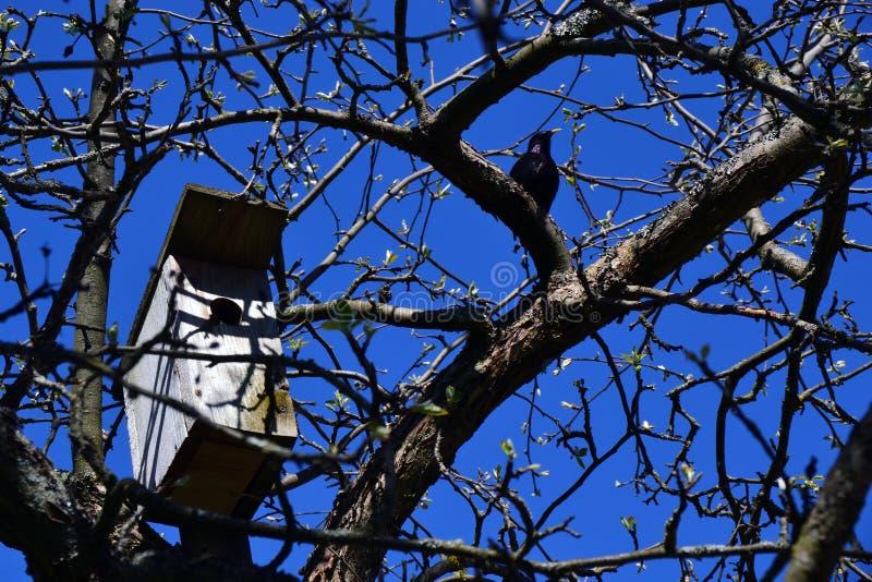 Étourneau et volière sur l'arbre photographie stock libre de droits